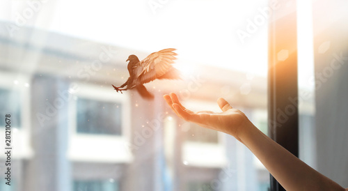 Woman praying and free bird enjoying nature from window at home on sunset background, hope concept - 281210678