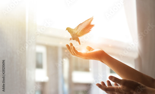 Woman praying and free bird enjoying nature from window at home on sunset background, hope concept