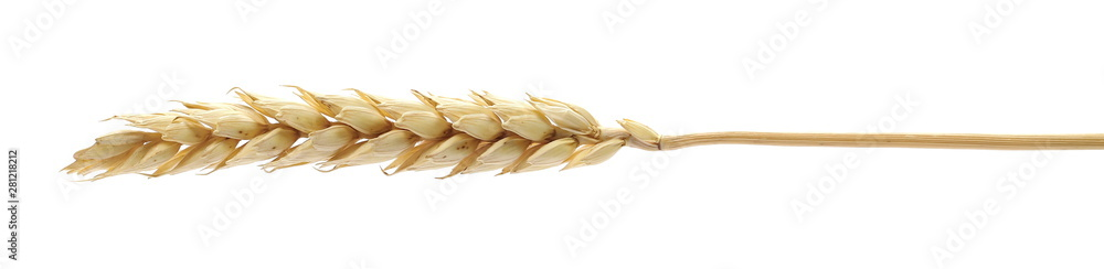 Fototapety, obrazy: Dry wheat ear, grain isolated on white background