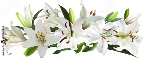isolated white large lily flowers stripe Fototapet