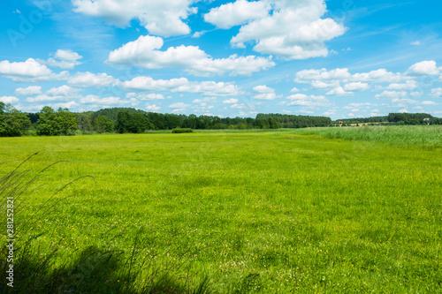 Fototapeta Łąka pole polana wieś las lato wakacje obraz