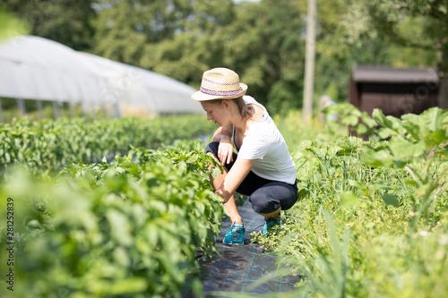 Junge Frau im Feld im Sommer Fototapet