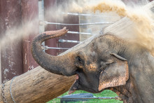 Elephant Cooling Off In Extreem Heat