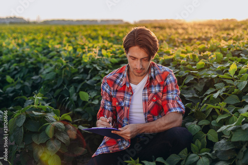 Fototapeta Young agronomist sitting  in cornfield  taking control of the yield and write a note obraz