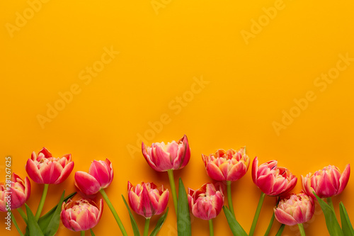 Spring tulips on yellow col...