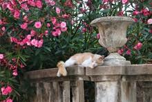 Cat In Dubrovnik