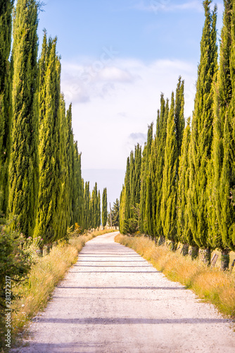 Italian cypress trees alley and a white road to farmhouse in rural landscape Canvas