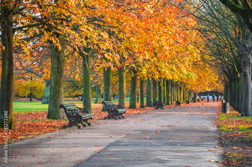 Ingelijste posters Herfst Tree lined autumn scene in Greenwich park, London