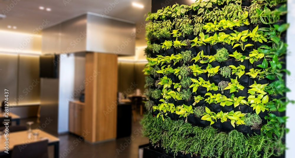 Fototapety, obrazy: Living green wall, vertical garden indoors  in modern restaurant.