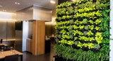 Living green wall, vertical garden indoors  in modern restaurant.