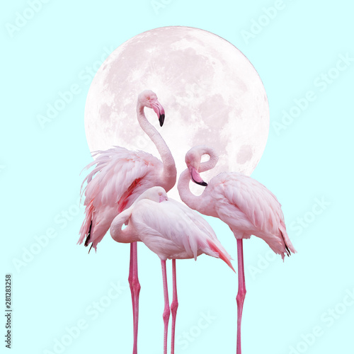 Photo moon and flamingo background design in light pink and turquoise colors, can be u