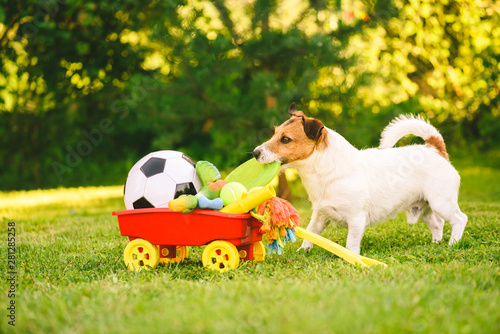 Fotografía  Happy dog chooses flying disc from cart full of dog toys