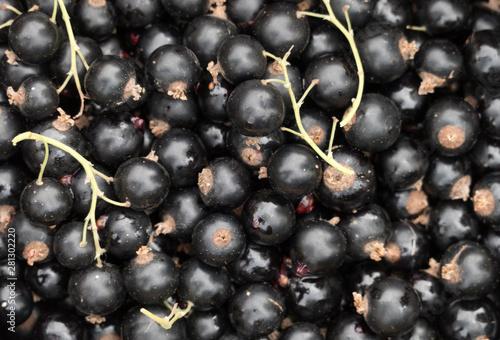 obraz lub plakat Freshly picked organic blackcurrants closeup background, top view