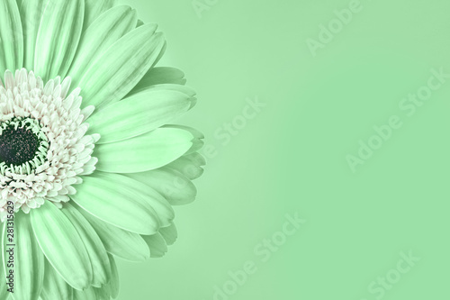 Photo sur Toile Fleuriste Closeup of trendy neo mint colored daisy flower with white center on green background with empty space. Year color trend concept. Toned image. Copy space.