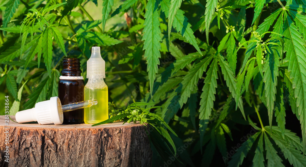 Fototapety, obrazy: Hemp CBD oil pipette, marijuana oil bottle, cannabis extracts in jars, medical marijuana, alternative medicine