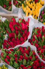 Bouquets Of Red Tulips.