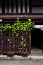 Japanese Shop Front