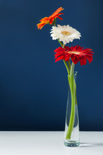 Three Colorful Gerberas In Gla...