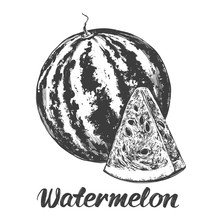 Fruit Watermelon Hand Drawn Ve...
