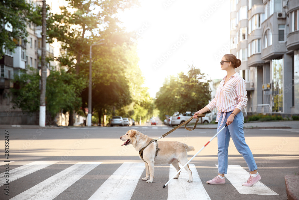 Fototapety, obrazy: Young blind woman with guide dog crossing road