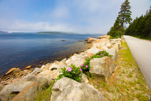 Schoodic Loop Road On A Bright, Foggy Day, Acadia National Park,  Maine