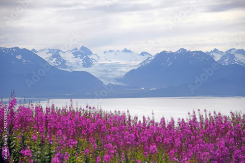 Grewingk Glacier with fireweed in the foreground - Homer, Alaska Canvas Print