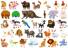 Diverse Set Of Isolated Animal...