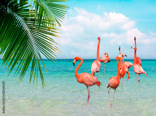 Canvas Prints Flamingo Vintage and retro collage photo of flamingos standing in clear blue sea with sunny sky summer season with cloud and green coconut tree leaves in foreground.