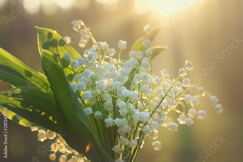 Muguet de mai Delicate bouquet of lilies of the valley on the background of the dawn sun