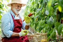 Senior Agronomist Collecting C...
