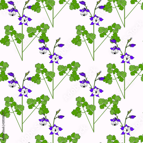 Fototapety, obrazy: Seamless aquilegia pattern. Violet flowers, green leaves hand drawn isolated flat design stock vector illustration for web, for print
