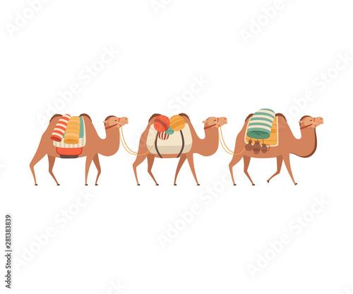 Caravan of Camels, Desert Animals Carrying Heavy Load, Side View Vector Illustra Fototapeta
