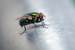 Fliege auf Alu