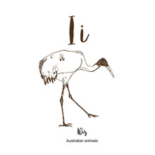 Ibis, A To Z, Alphabet Sketch Australian Animals Drawing Vector Illustration. Vintage Hand Drawn With Lettering. Letter I For Ibis. ABC.
