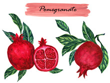 Watercolor Healthy Collection Vintage Pomegranate With Branch Foliage Composition. Isolated On White Background Botanical Illustration For Design