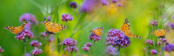 Panoramski pogled na vrtno cvijeće i leptire Vanessa cardui