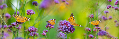 Fotografie, Obraz  The panoramic view the garden flowers and butterflies Vanessa cardui