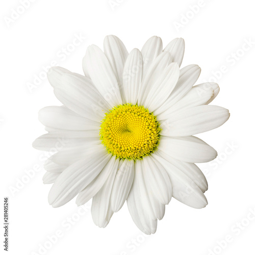 In de dag Madeliefjes Daisy isolated on white background
