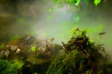 熱帯地域の葉っぱと蒸気