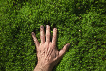 A Man's Hand Touches A Green F...