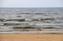 Wooden Snag On Stone Seashore ...
