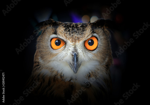 Photo sur Toile Chouette Eyes of Eagle Owl on dark background.