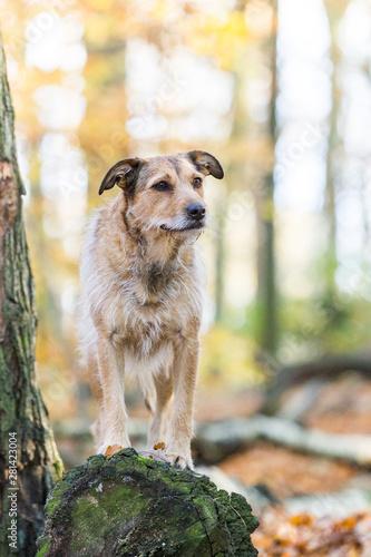 Photo süßer Hund im Herbst Wald auf einem Baumstamm
