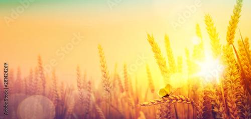 Pinturas sobre lienzo  Countryside landscape; sunrise over summer golden wheat field