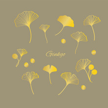 Gold Ginkgo Leaves And Nuts Vector Illustration Set