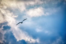 Seagull Flying And Hovering Against A Moody Dramatic Cloudy Sky Background