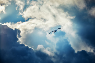 Fototapeta Minimalistyczny Seagull flying and hovering against a moody dramatic cloudy sky background