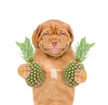 Smiling Puppy With Pineapples....