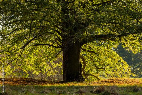 Fotografía  gardens of estate charlecote park warwickshire england uk
