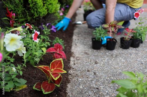 Papiers peints Jardin ガーデニング 小さな花壇づくり